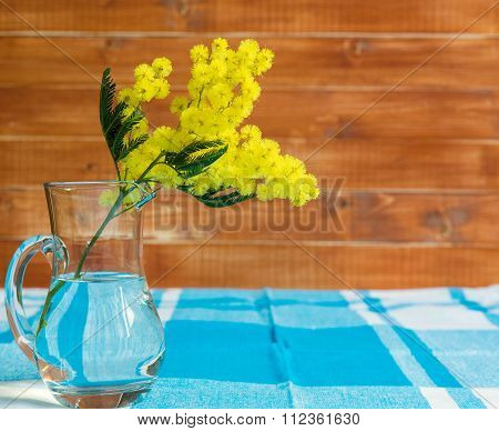 Branch of mimosa on table