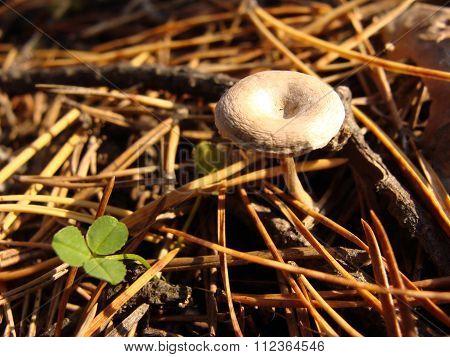 Mushroom macro needles