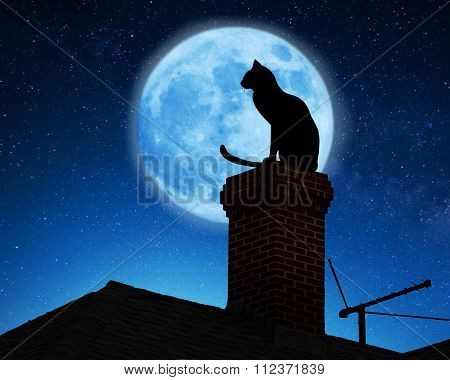 Cat on a roof.