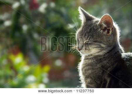 Gray Cat Side View Portrait