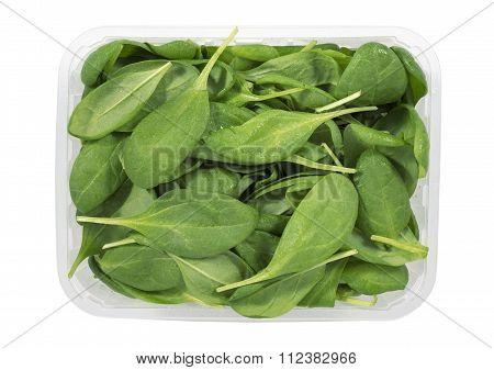 Fresh Spinach Tray