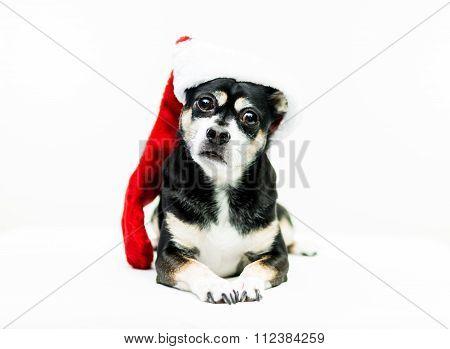 Dog Wearing Christmas Stocking - Center