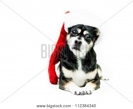 Dog Wearing Christmas Stocking - Right Side