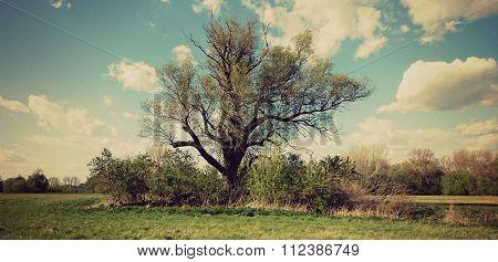 Egy fa a semmi közepén