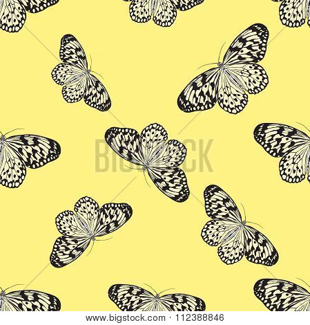 Seamless Pattern With Butterfly Idea Leuconoe. Paper Kite .    Hand-drawn Paperkite Butterfly . Vect