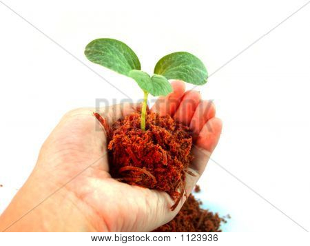 Hand Holding Small Tree