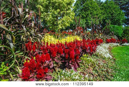 Gardens of color.  Variety of spring flowers.