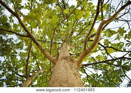Climbing to the Tree