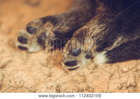 hind legs small puppies lie