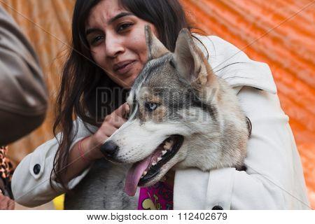 Siberian Husky with a Girl