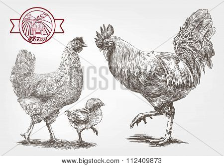 Sketch of brood-hen