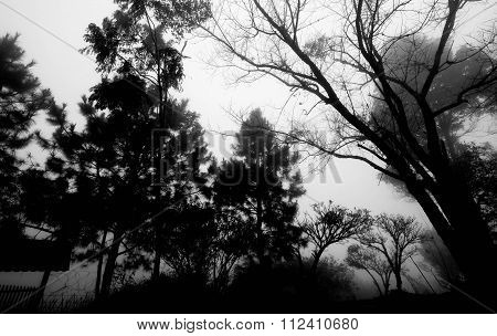Silhouette trees in the forests with fog in winter