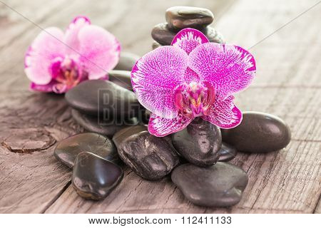 Phalaenopsis Orchids And Black Stones On Weathered Wood