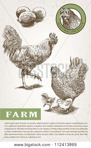 Sketch of brood-hen and rooster