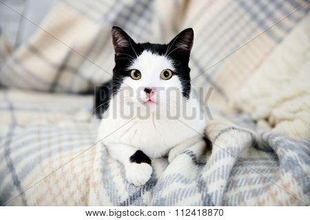 Beautiful cat on plaid