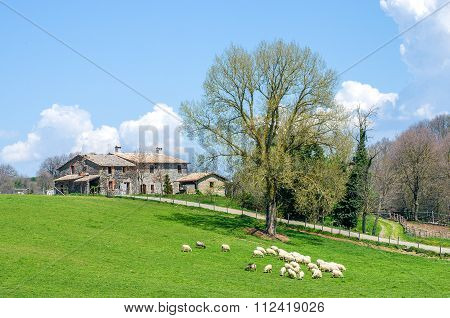 Sheep Grazing With An Old Cottage In The Background