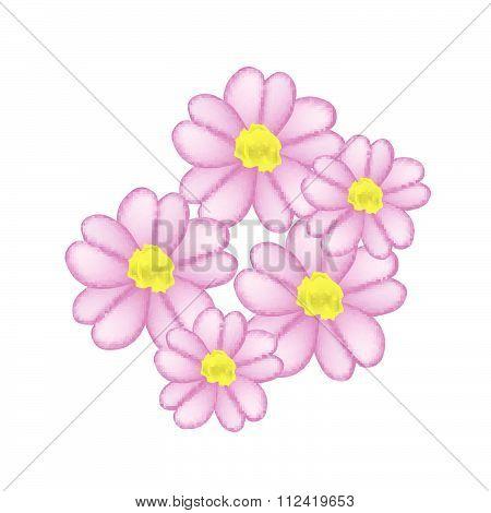 Beautiful Pink Yarrow Flowers Or Achillea Millefolium Flowers