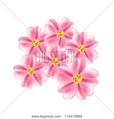 Old Rose Yarrow Flowers Or Achillea Millefolium Flowers
