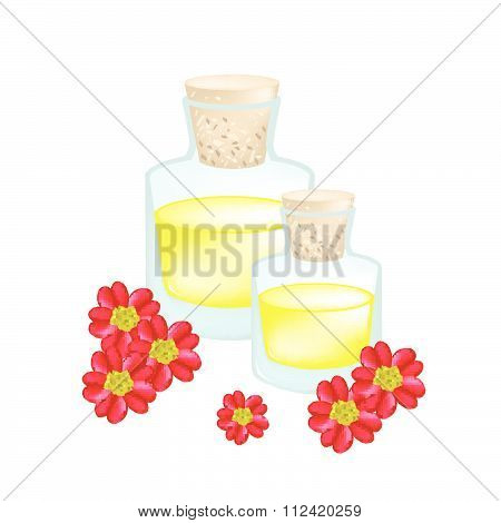 Red Yarrowor Achillea Millefolium With Essential Oil