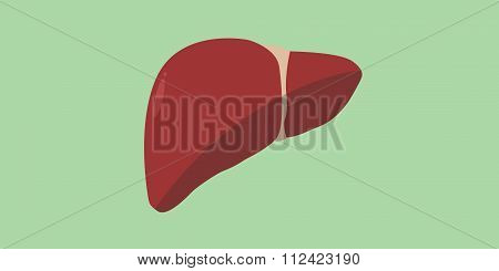 human liver red anatomy organ isolated