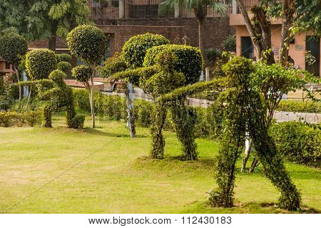 Topiary hedge figures