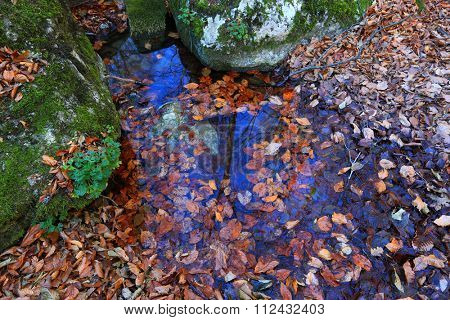 autumn leafs in water among stones covered green moss