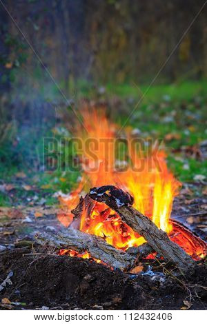 Scene with bonfire in the forest