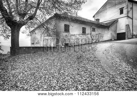 Monferrato village view, early winter. Black and white