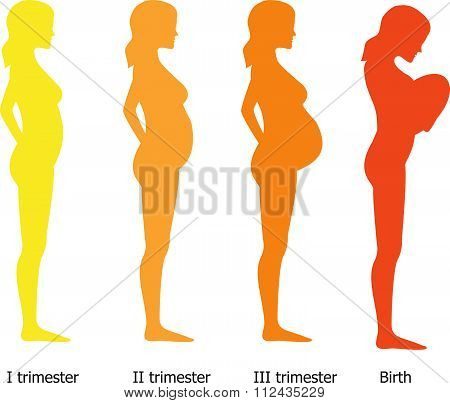 Infographic Of Pregnant Woman In Different Period