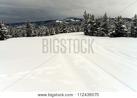 Yellowstone Winter Road Snowing