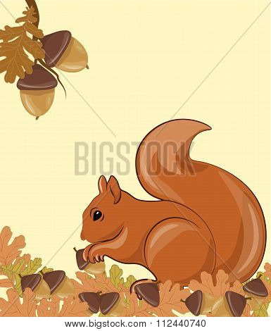 Squirrel in forest