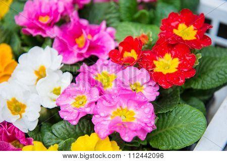Beautiful Small Flower In Japan