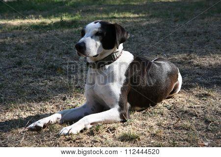 Mongrel Dog Posing