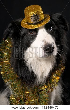 A portrait of a dog in hat and tinsel on dark background