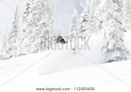 Powder Tree Skiing