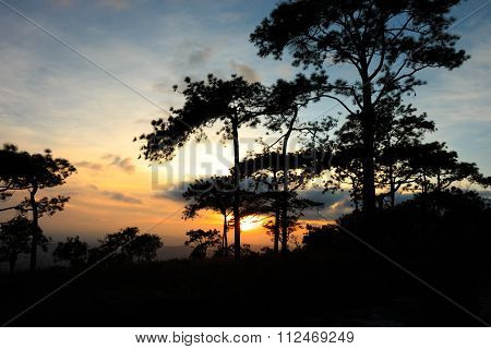 Silhouette Of Trees When Sunset