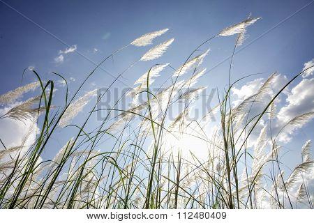 Grass Wayside