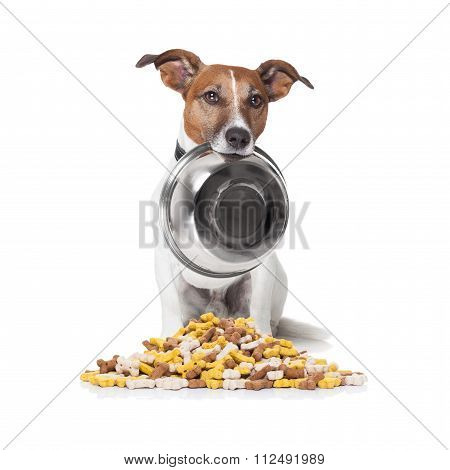 Hungry Dog Food Bowl