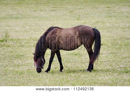 Horse On Pasture