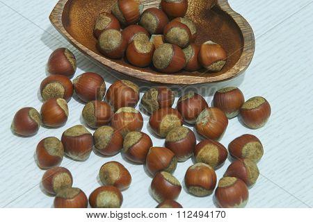 wood hazelnut