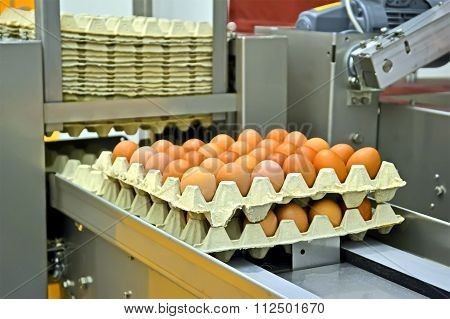 Yellow Eggs In Cardboard Container, Industrial Processing