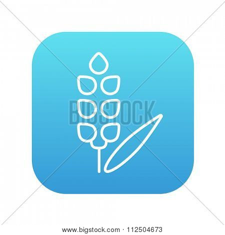 Wheat line icon for web, mobile and infographics. Vector white icon on the blue gradient square with rounded corners isolated on white background.