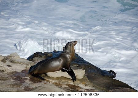 Sea Lion Takes A Sun Bath Near La Jolla Cove
