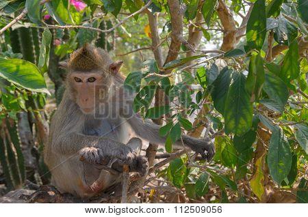 Portrait Of A Monkey In Wildlife.