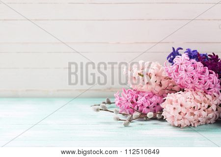 Background With Fresh Pink Hyacinths And Willow  On Turquoise  Painted  Wooden Planks.