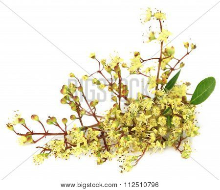 Ayurvedic Henna Flower