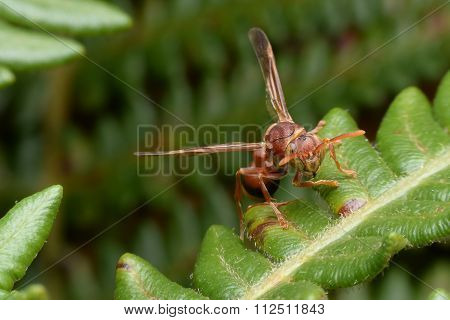 Hornet Out Hunting For Food
