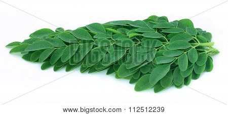 Edible Moringa Leaves