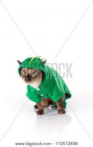 Siamese cat with a green dragon costume on a white background