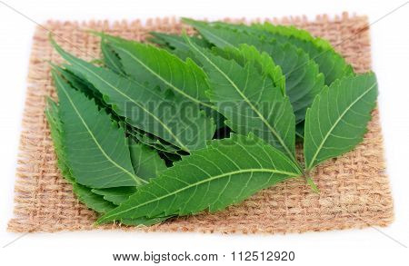 Medicinal Neem Leaves On A Sack